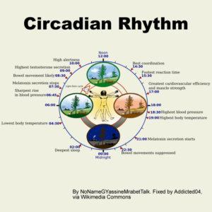 circadian-cycle-biological-clock-